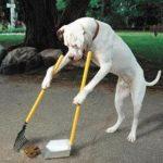 Como Ensinar Comandos Básicos para seu Cão – Passo a Passo
