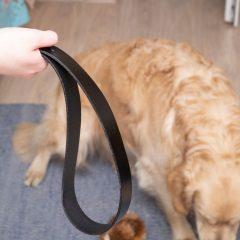 Como punir corretamente seu cachorro em casa